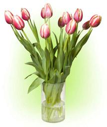 """11 тюльпанів """"Кіс Неліс"""""""